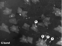 hyperspectral imager