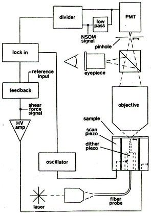 Schematic of a combined shear force and near-field scanning optical microscope.