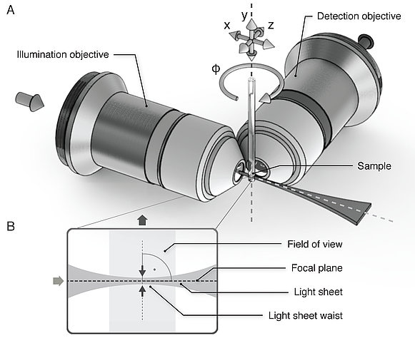 Sketch of the Light Sheet Microscopy principles (Image: Morgridge Institute for Research, Madison, WI)