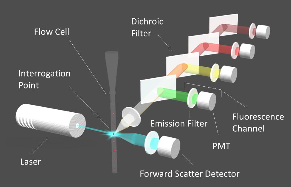 Diagram of a flow cytometer