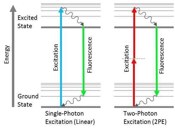 Jablonski diagrams showing the difference between linear fluorescence (left) and two-photon excitation (right).