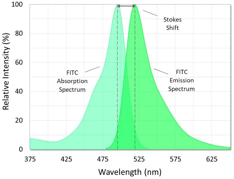 Absorption and emission spectra of fluorescein isothiocyanate (FITC). The Stokes shift is the difference between the spectral peaks.