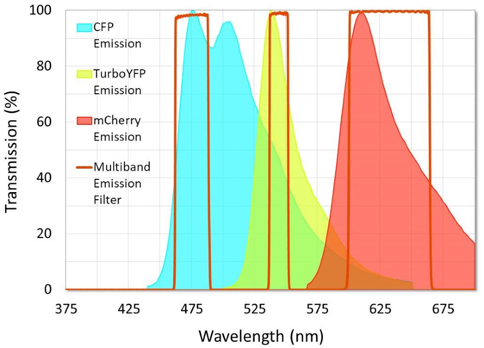 Example of a multiband emission filter that was designed to minimize crosstalk between fluorophores. Note that crosstalk in the second channel is unavoidable because of the emission spectra overlap between CFP and TurboYFP.I