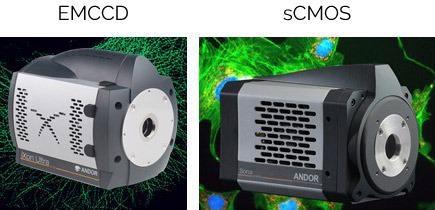 Image ofiXon Ultra 888 EMCCDandSona 4.2B-6 sCMOS.