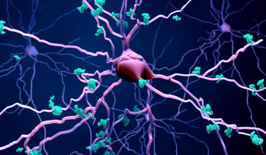 brain neurons and proteins