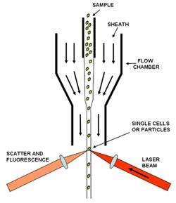Schematic of Flow Cell