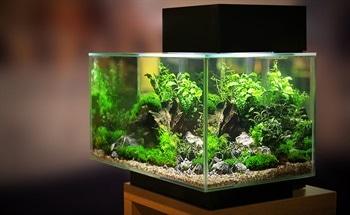 Aquarium Lighting Affects its Inhabitants