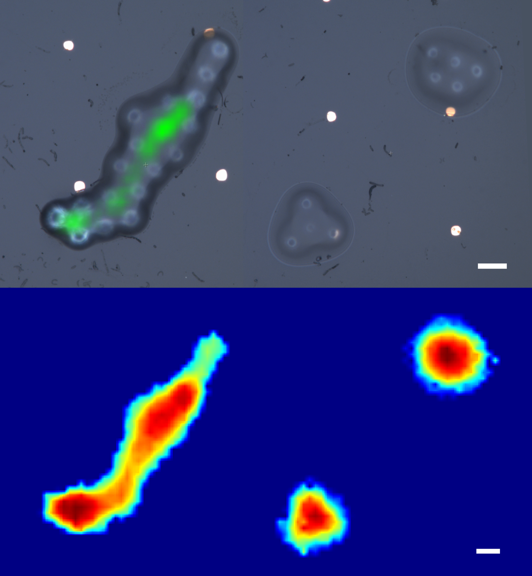 New Fiber-Optic Imaging Probe for More Effective Diagnoses of Various Diseases