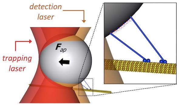 New Optical Tweezer Could Help Manipulate Micron-Scale Matter