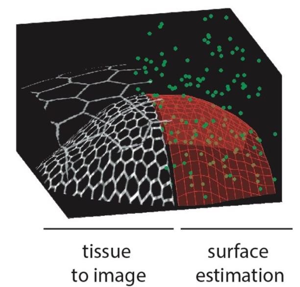 New Smart Microscope Adapts Itself to Image Biological Structures