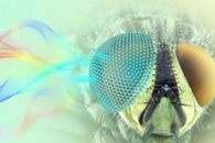 Researchers Develop a Light-Sensitive 3D-Printed Smart Gel