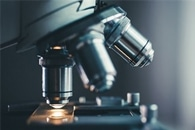 Salk Researchers Use Deep Learning to Improve Microscope Image Quality
